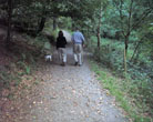 Walking at Trelissick Cornwall