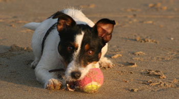 Millie's Dog Guide to Dog Friendly Cornwall