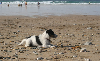 Millie on Fistrall Beach Newquay Cornwall