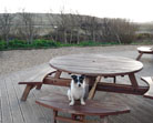 Dog Friendly Places to Eat Cornwall
