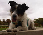 Millie Cornish Dog's Guide to Dog Friendly Cornwall