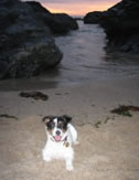 Dog Friendly Beaches Cornwall