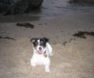 Millie on dog friendly beach Cornwall