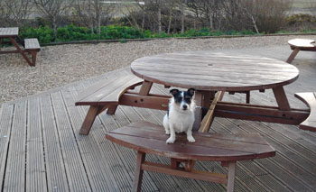 Millie at Dog Friendly Place to Eat Cornwall